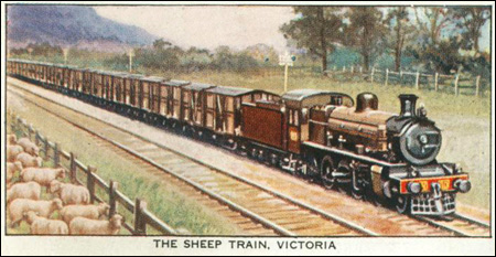 The Sheep Train